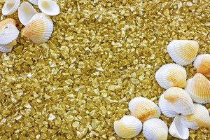 Shells And Pebbles Background 208