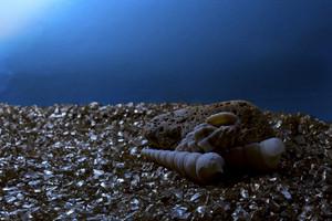 Shells In Dark