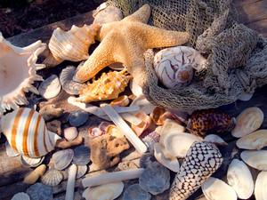 Shells. Marine Romantic Still Life