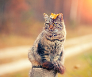 Siberian cat sitting on a wooden post