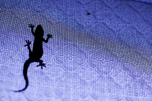 Silhouette of a lizard