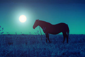 Silhouette of the horse on a meadow in the darkness