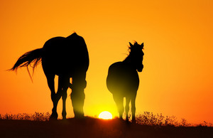 Silhouettes of two horses at sunset
