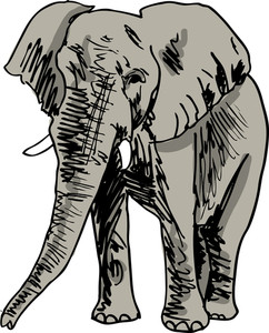 Sketch Of Elephant. Vector Illustration