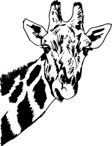 Sketch Of Giraffe Head. Vector Illustration