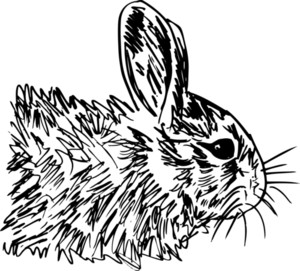 Sketch Of Little Hare. Vector Illustration