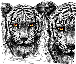 Sketch Of White Tiger