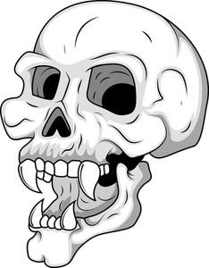 Skull Having Long Teeth