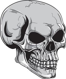 Skull Vector Element