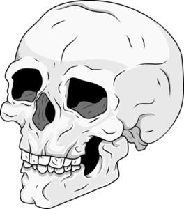 Skull Vector Stock Illustration
