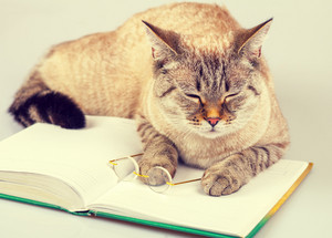 Sleeping cat laying on open book