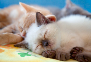 Sleeping cute little kittens