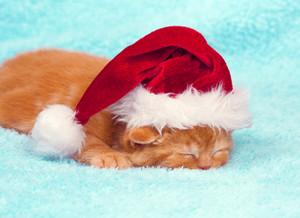 Sleeping little kitten wearing Santa hat