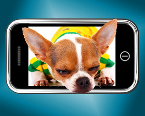 Small Chihuahua Dog Photo On Mobile Phone