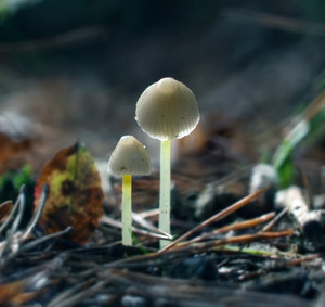 Small uneatable toadstools growing in forest.