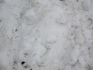 Snow 4 Texture