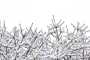 Snow Fall On Tree Background