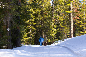 Snow Hikers In Forest