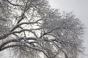 Snow On Trees 215