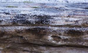 Snow Wood Texture