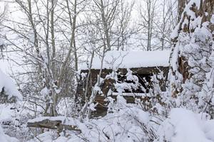 Snowfall Trees