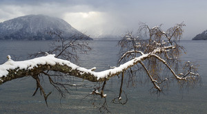 Snowy branch over a lake on a cloudy day