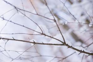 Snowy Winter