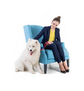 Sofa isolated with white dog