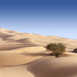 Sparse vegetation growing in a sandy desert