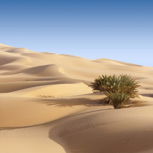 Sparse vegetation in an endless desert