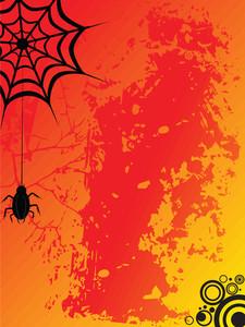 Spider With Grungy Background In Orange
