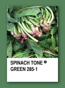 Spinach Tone Green. Color Sample Design