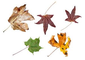 Spring Dry Leaves