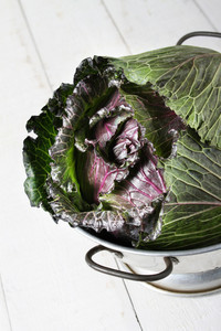 Spring King Cabbage