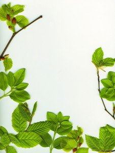 Spring Leaves Border Over White Background