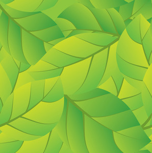 Spring Leaves. Vector.