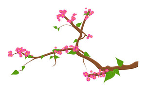 Spring Nature Pink Flowers Branch