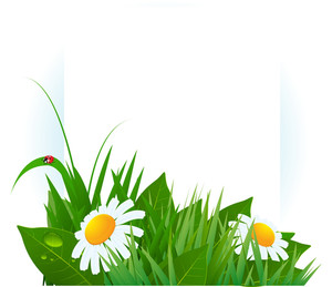 Spring Vector Template. Lush Green Grass And Daises.