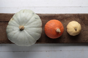 Squash Pumpkin Selection