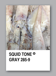 Squid Tone Gray. Color Sample Design