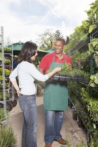 Staff at plant nursery