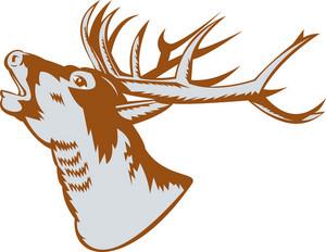 Stag Deer Roaring