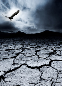 A bird flies over a desolate landscape