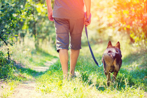 A man with a dog on a leash is walking along the rural road in summer