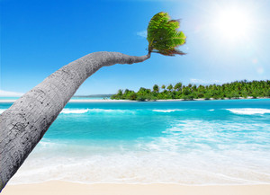 A palm tree reaches out to the turquoise lagoon