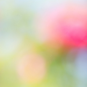 Abstract nature flowers background. Blur