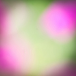 Abstract nature flowers colorful background. Blur. Spring