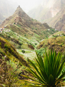 Agave plant with lombo de pico in Xo-xo valley in background. Trakking route 202 over Rabo Curto to Ribeira da torre. Santo Antao island, Cape Verde