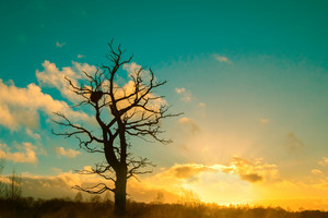 Alone tree without leaves against cold sunset sky