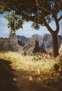 Amazing huge barren mountain range appearing on the horizon. Glowing sun the only mango tree providing shade . Santo Antao Island, Cape Verde